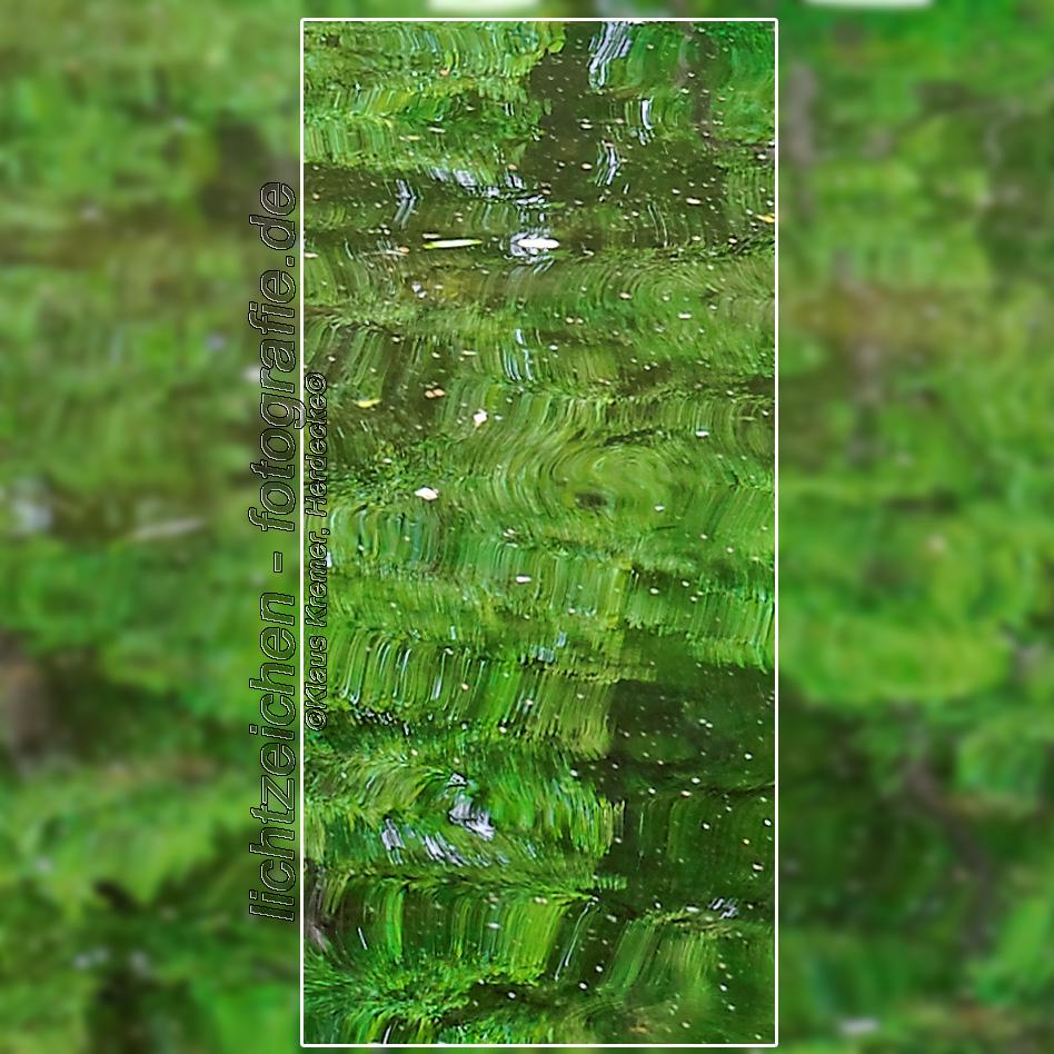 Impressionen > Lichtmalerei in Grün #01
