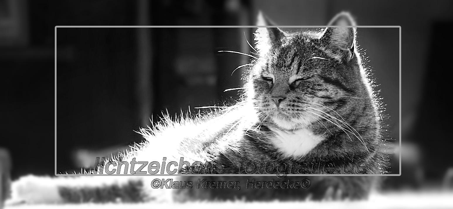 Katzen > Merlin #01