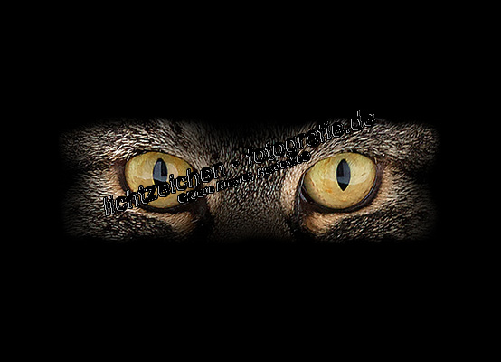 Katzen > Merlin #02