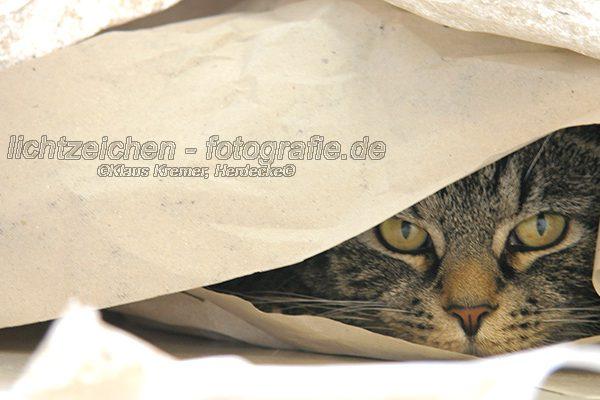 Katzen > Merlin #03