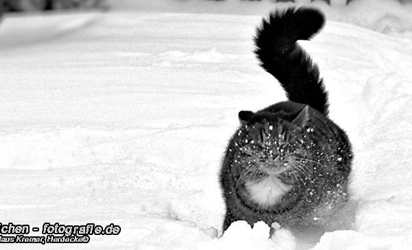 Katzen >Merlin #04 >Schneegestöber