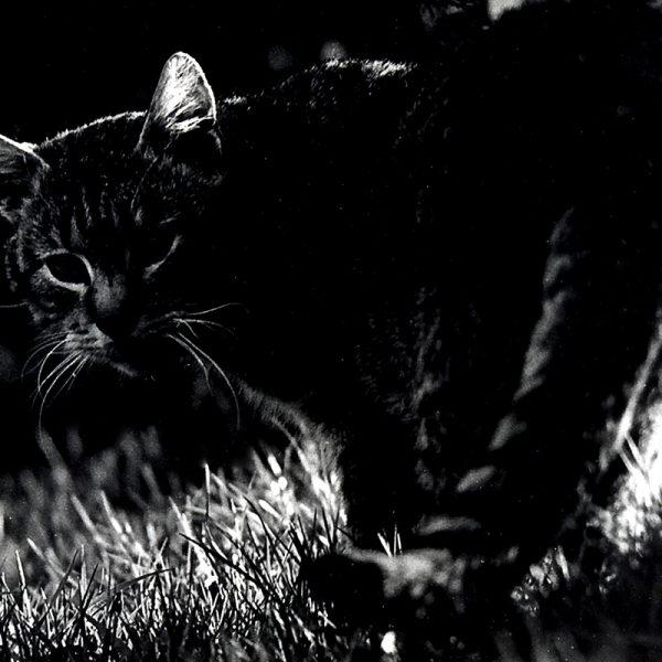 Katzen >Wusel#01